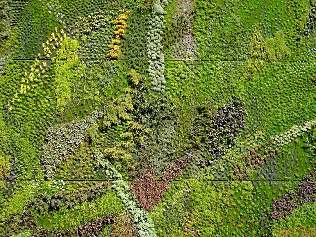 baldiri : garden wall : baldiri08022701.jpg