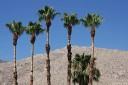 baldiri : palm springs : baldiri09072801