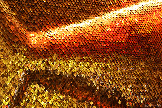baldiri : golden fish wall : baldiri09110104