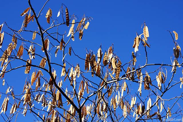 baldiri : cel blau, hivern fred : baldiri100124