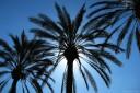 baldiri : anaheim palms : baldiri101013