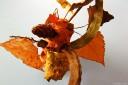 baldiri : arbre de tardor : baldiri101206