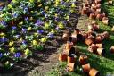 baldiri : flors i testos : baldiri110109