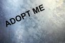 baldiri : adopt me